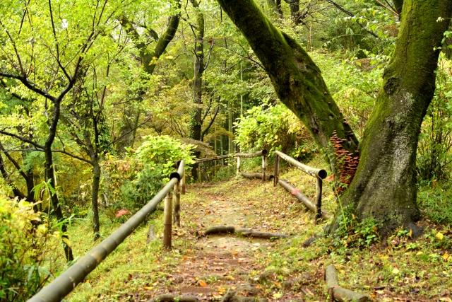 移ろいゆく自然の中を発達障害の子どもたちとハイキング