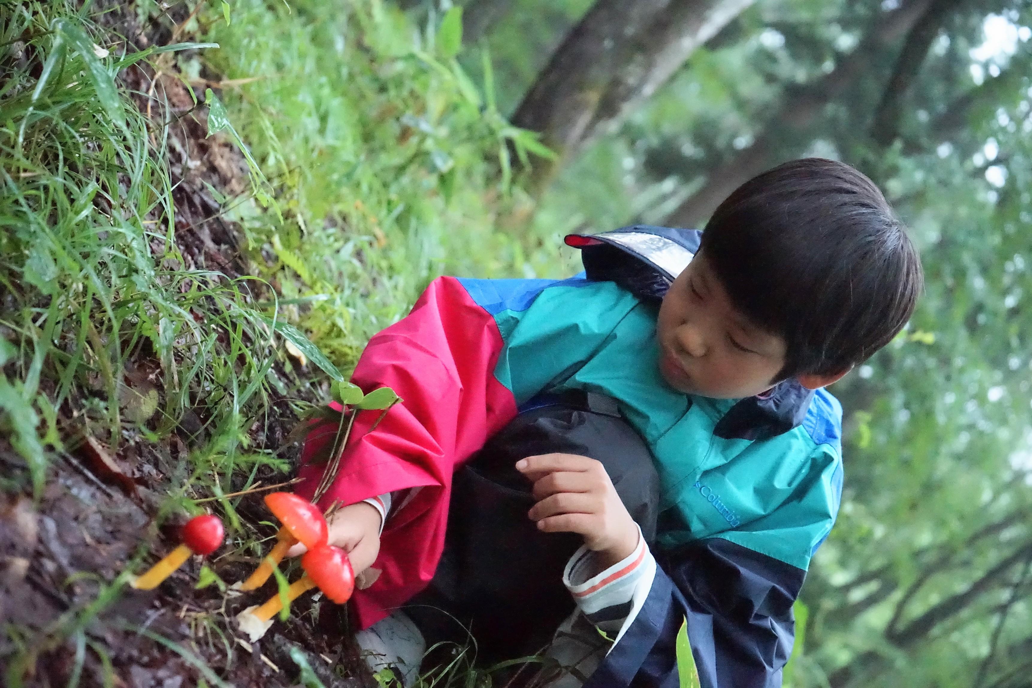 アファンの森でタマゴタケを採集