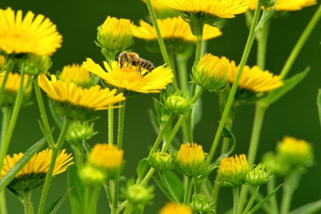子どもが蜂に刺されないようにする予防法とは?